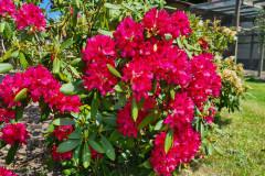 Wiesengrund Blumenpracht Rot